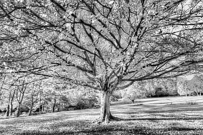 Photograph - The Autumn Ghost Tree by David Pyatt
