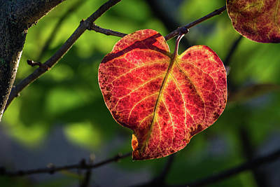 Photograph - The Autumn Heart by Bill Pevlor