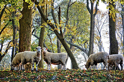 Photograph - The Autumn Herd 3 by Bonfire Photography