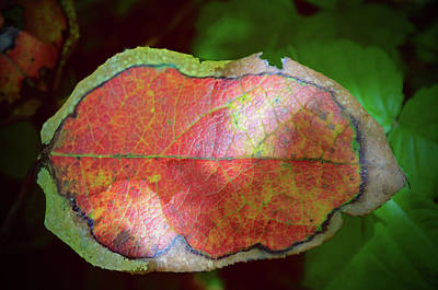 Photograph - The Autumn Leaf by Tikvah's Hope