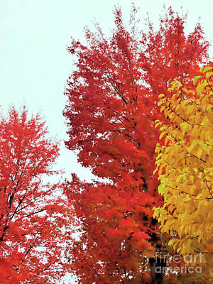 Photograph - The Autumn Leaves 2 by Victor K