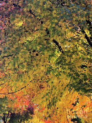 Photograph - The Autumn Leaves by Victor K
