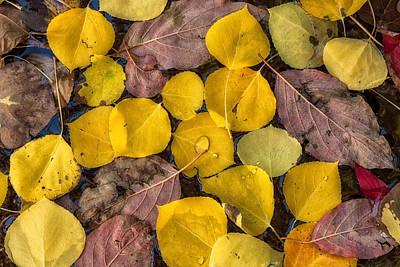 Photograph - The Autumn Mosiac by Jonathan Nguyen