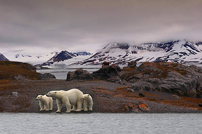 Polar Bear Photograph - The Autumn Of The North by Mathilde Collot