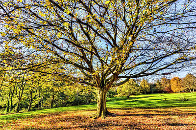 Photograph - The Autumn Tree by David Pyatt