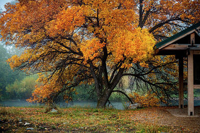 Rivers In The Fall Photograph - The Autumn Tree by TL Mair