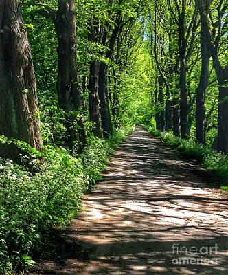 Photograph - The Avenue Of Limes At Mill Park by Joan-Violet Stretch