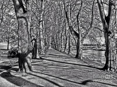 Photograph - The Avenue Of Limes In Greyscale by Joan-Violet Stretch