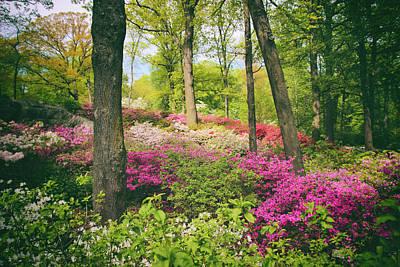 Photograph - The Azalea Woodland by Jessica Jenney