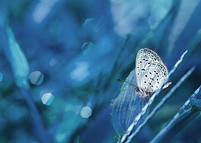 Butterfly Photograph - The Baby Dancing by Amri Arfianto