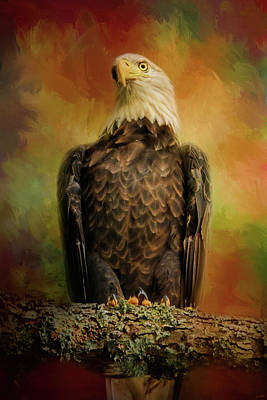 Photograph - The Bald Eagle In Autumn by Jai Johnson