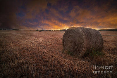 Photograph - The Bale Of Hay by Hugh Walker