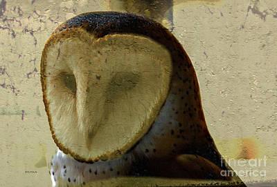 Portraits Photograph - The Barn Owl  by Steven  Digman