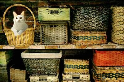 Photograph - The Basket Shelf by Diana Angstadt