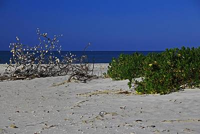Photograph - The Beach At Gasparilla Island State Park II by Michiale Schneider