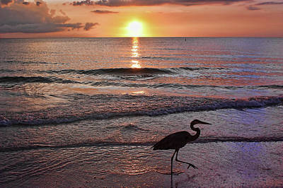 Photograph - The Beachcomber Shuffle by HH Photography of Florida