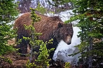 Bath Time Rights Managed Images - The Bear 2. Royalty-Free Image by Tibor Skarupa