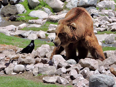 Photograph - The Bear And The Crow By Suze by Jay Milo