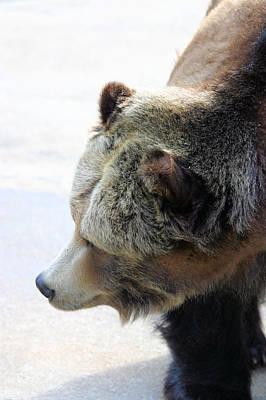 The Bear Art Print by Karol Livote
