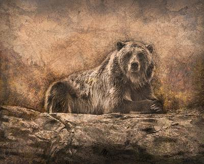 Photograph - The Watchful Brown Bear by Ray Van Gundy