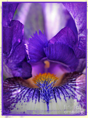 Photograph - The Beard In The Iris by Mindy Bench