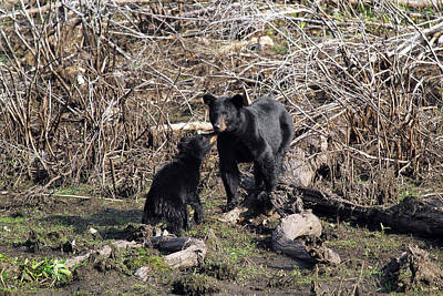 Photograph - The Bears IIi by Dawn J Benko
