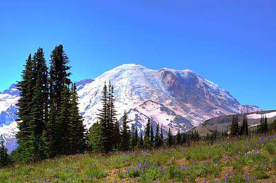 Photograph - The Beautiful Mt Rainier by David Patterson
