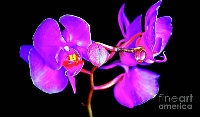 Photograph - The Beautiful Orchid12518-4 by Ray Shrewsberry