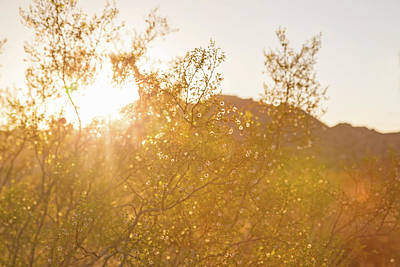 Photograph - The Beauty Of A Desert Sunset by Kunal Mehra