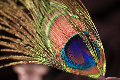 Photograph - The Beauty Of A Feather by Jeff Swan