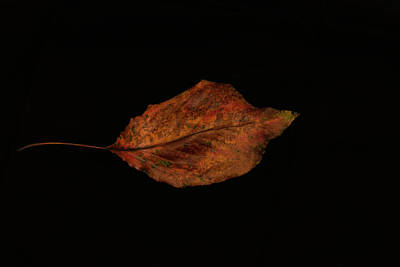 Photograph - The Beauty Of A Leaf by Dennis Reagan