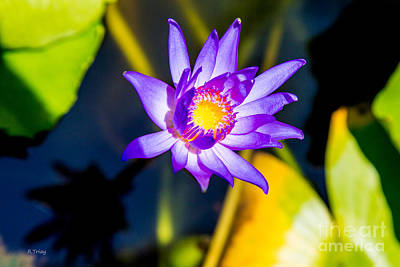 Photograph - The Beauty Of A Lily Pad Flower by Rene Triay Photography
