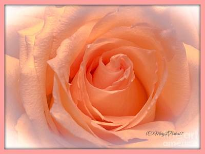 The  Beauty Of A Rose  Copyright Mary Lee Parker 17,  Art Print