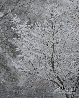 Photograph - The Beauty Of A Winter's Snow by Maria Urso