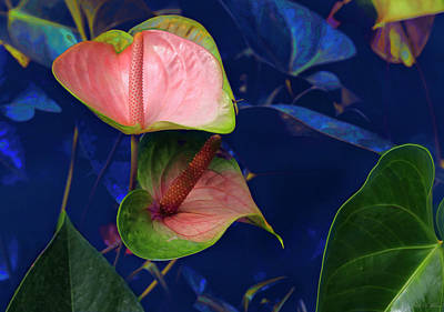 Photograph - The Beauty Of Anthurium by John Rivera