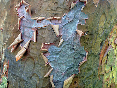 Photograph - The Beauty Of Bark by Jessica Jenney