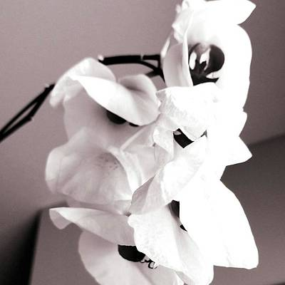 Photograph - The Beauty Of Death by Tracey Myers