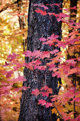 Photograph - The Beauty Of Fall Colors  by Saija Lehtonen