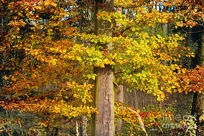 Photograph - The Beauty Of Fall by Jutta Maria Pusl