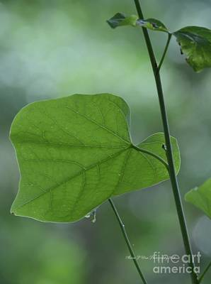 Photograph - The Beauty Of Green by Maria Urso