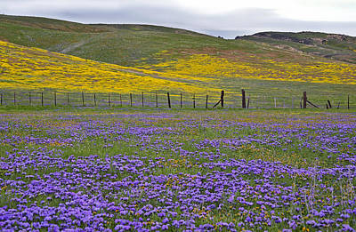 Fiddleneck Photograph - The Beauty Of The Carrizo Plain by Kathy Yates