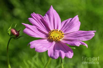 Flower Gardens Photograph - The Beauty Of The Garden by Veikko Suikkanen