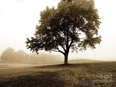 Photograph - The Beauty Of Trees by Marcia Lee Jones