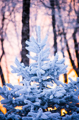 Photograph - The Beauty Of Winter by Shelby Young