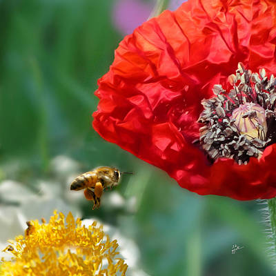 Photograph - The Bee And The Poppy by TK Goforth