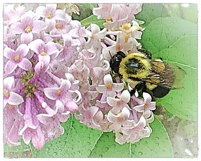 Photograph - The Bee by Mario MJ Perron