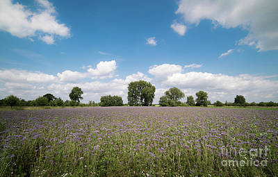 Photograph -  The Bee Meadow by Giovanni Malfitano