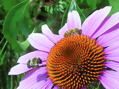 Photograph - The Bees Feast by Susan Lafleur
