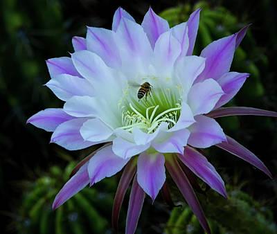 Photograph - The Bees Knees  by Saija Lehtonen