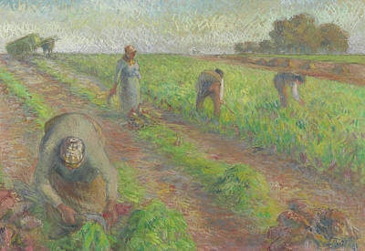 Worker Painting - The Beet Harvest by Camille Pissarro